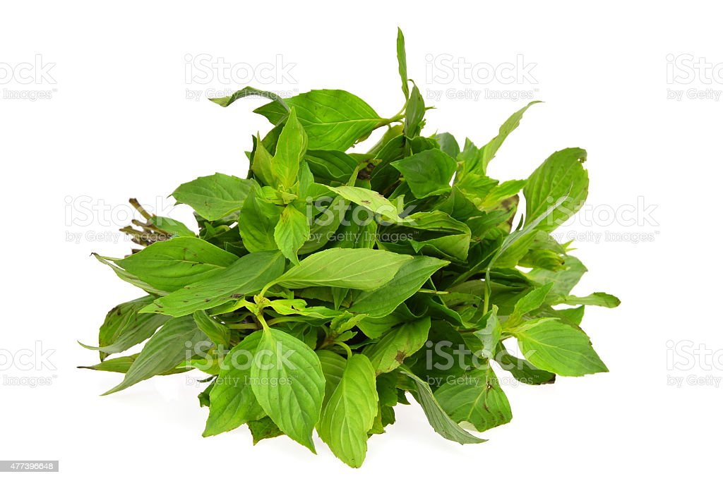 Green basil isolated on the white background stock photo