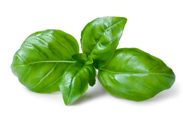 green basil leaves isolated on a white background - basil stock photos and pictures
