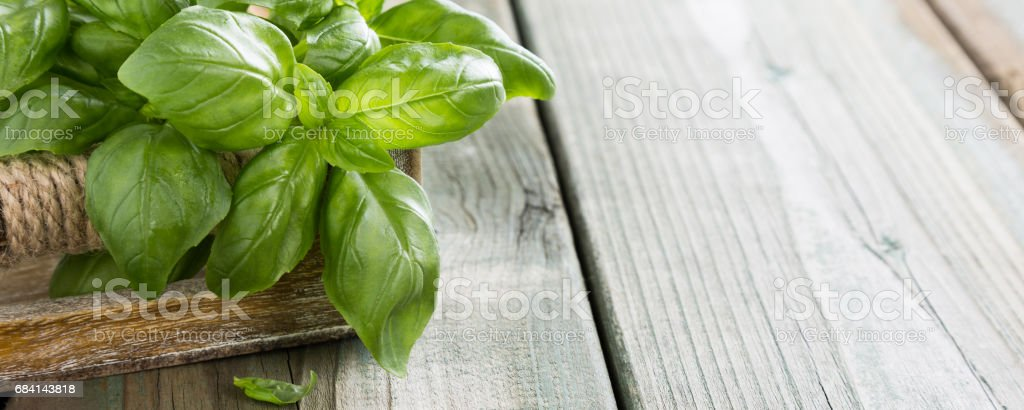 Green basilic leaves zbiór zdjęć royalty-free