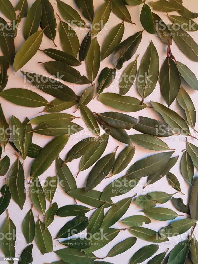Green Bay Leaves flat lay royalty-free stock photo