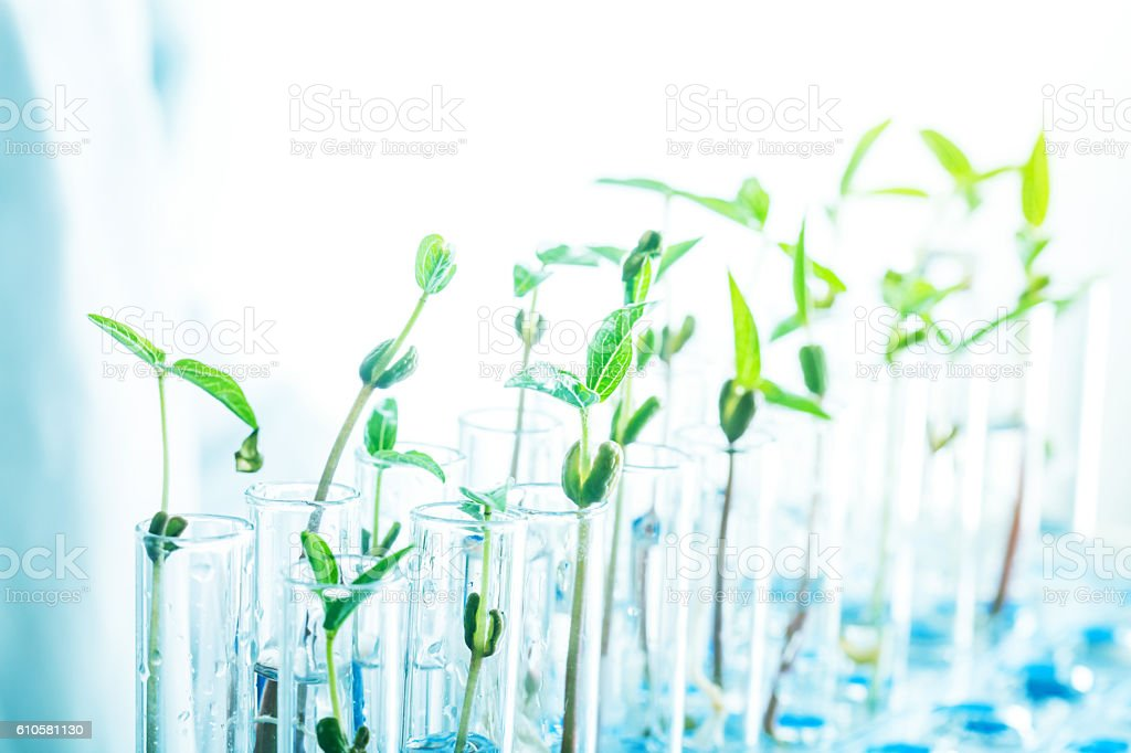 green bean sapling on test tubes stock photo