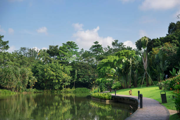 green beautiful park and blue sky background - singapore nature stock photos and pictures