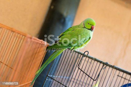 1153034372istockphoto Green bird. 1169585723