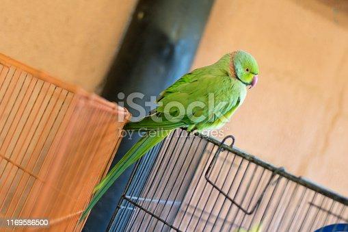 1153034372istockphoto Green bird. 1169586500