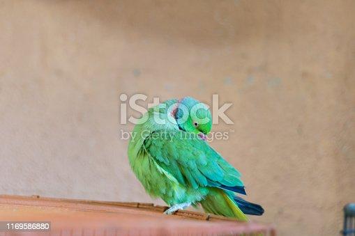 1153034372istockphoto Green bird. 1169586880