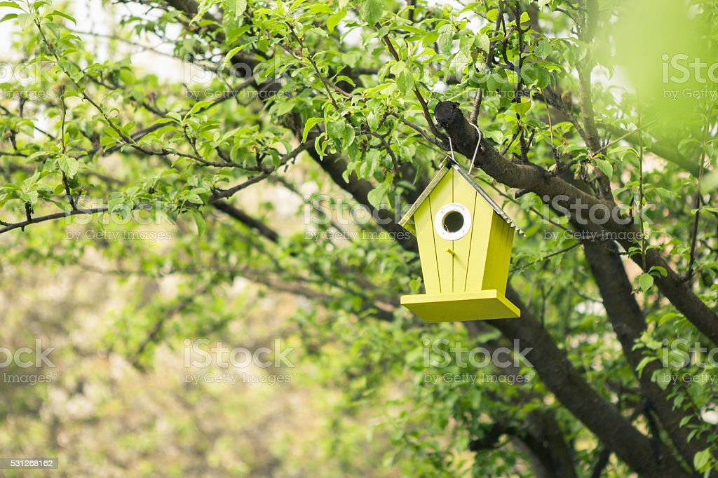 Green birdhouse hanging from tree stock photo