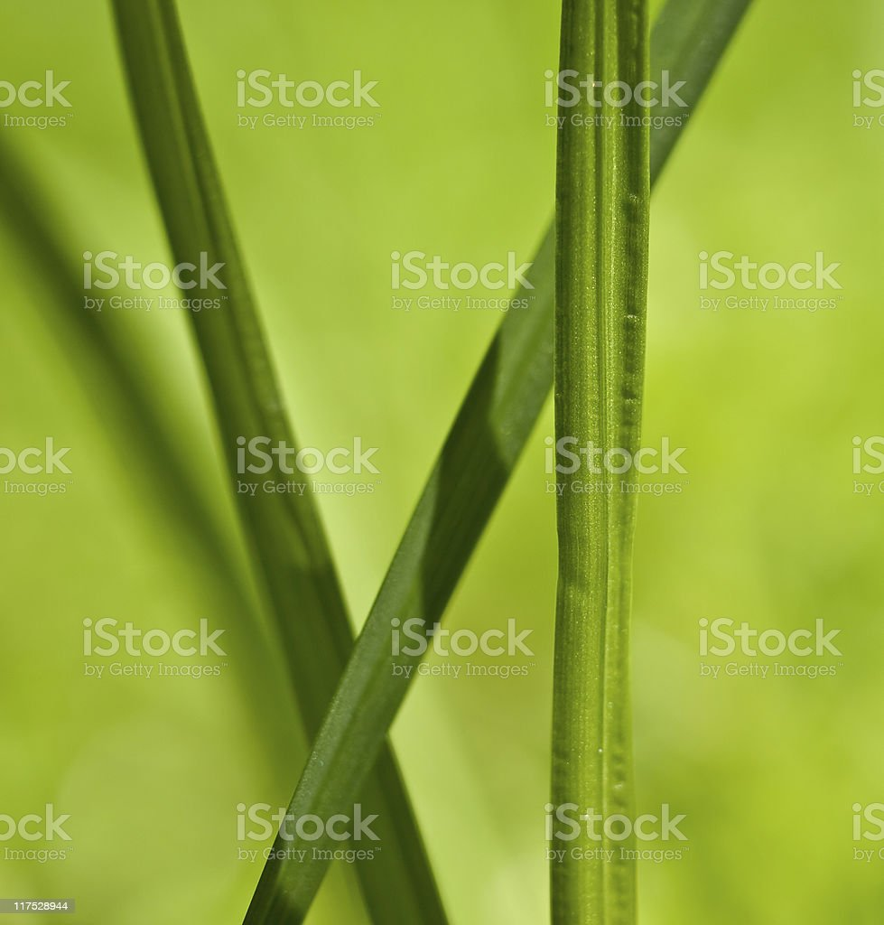 Green blade of grass royalty-free stock photo
