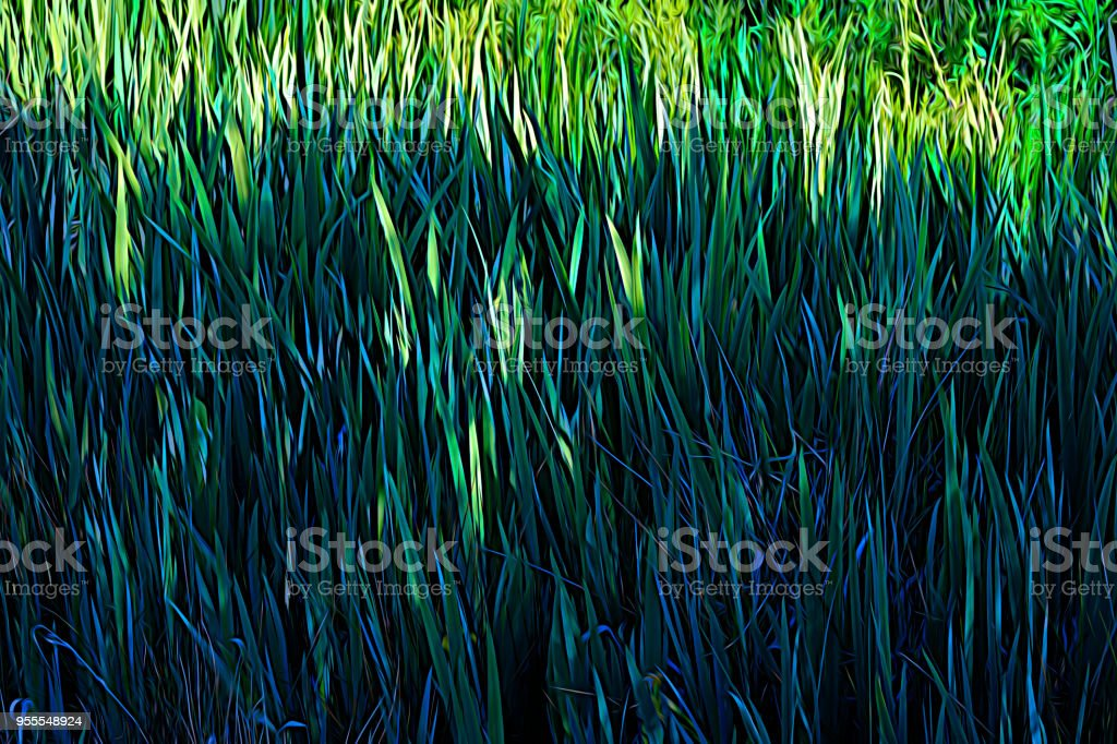 Green blades of leaves of yellow flag iris in early spring stock photo
