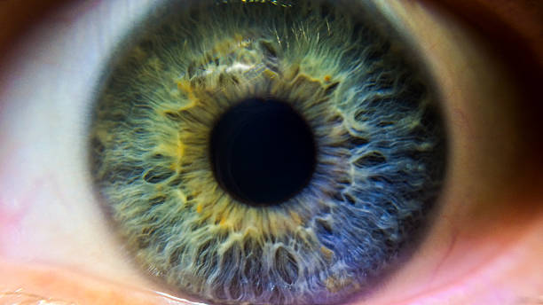 green, blue and purple iris - 特寫 個照片及圖片檔