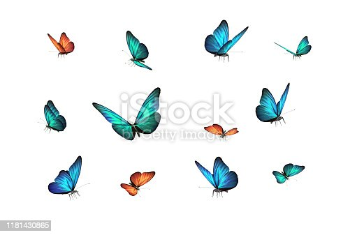 green, blue and red butterfly isolated on white back ground.