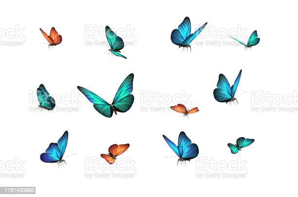 Photo of green, blue and red butterfly isolated on white back ground