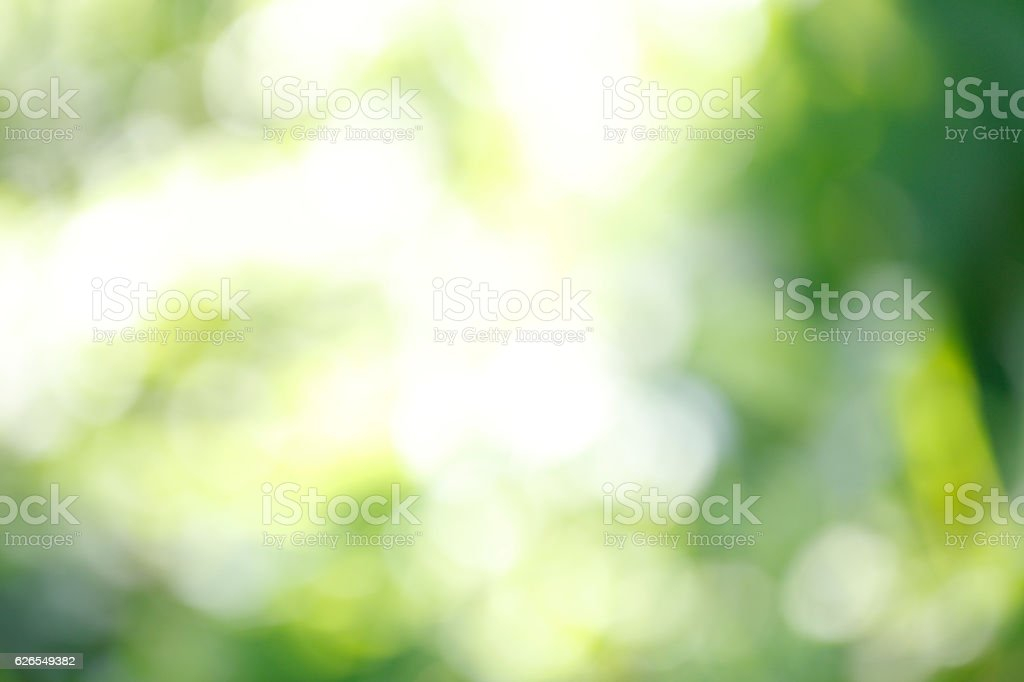 green bokeh from tree stock photo