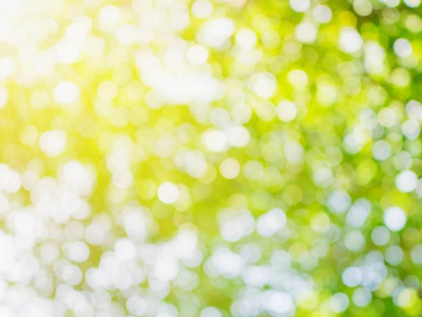 ボケ味緑空間と自然な背景の光 - 木漏れ日 ストックフォトと画像