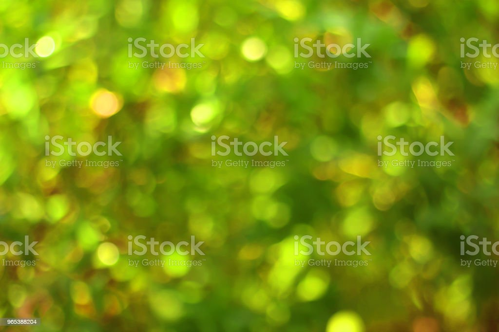 Green bokeh nature background. zbiór zdjęć royalty-free
