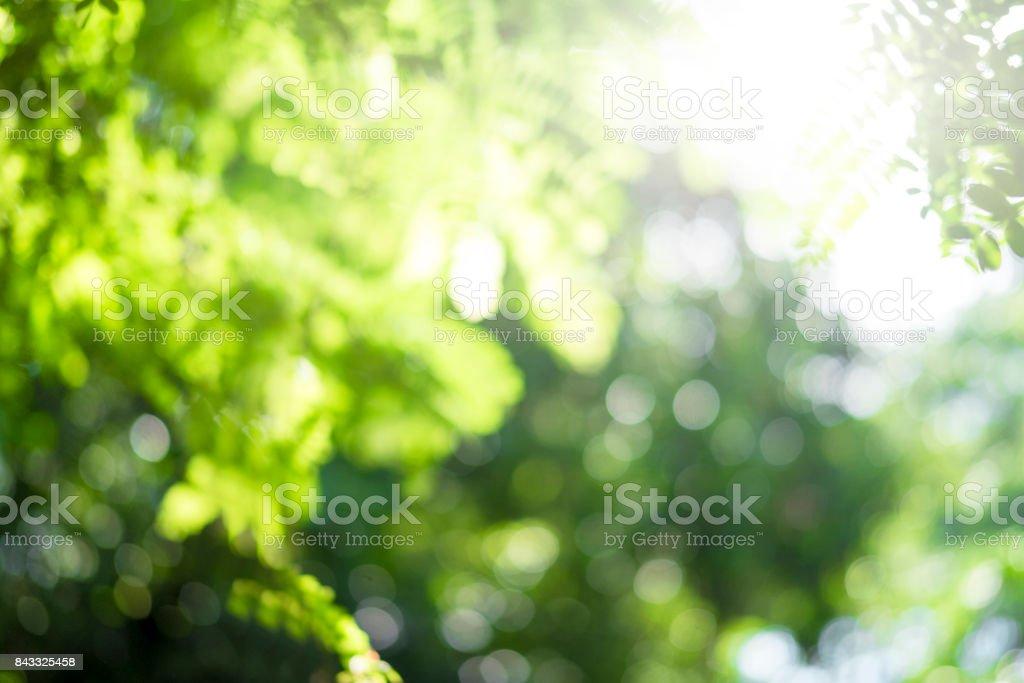 Grüne Bokeh aus Fokus Hintergrund aus der Natur. – Foto