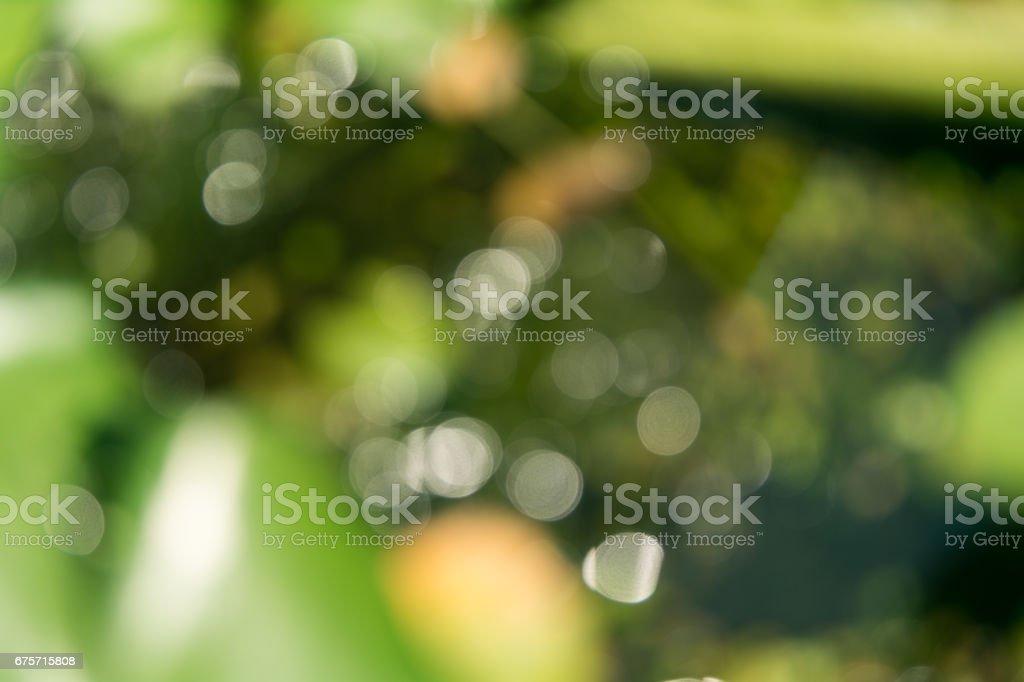 綠色的散景 免版稅 stock photo