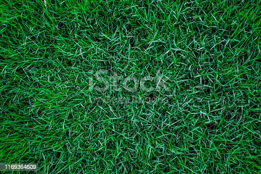 Green botanic fresh grass background, Natural texture