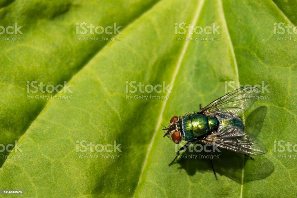 Vert bouteille Fly photo libre de droits