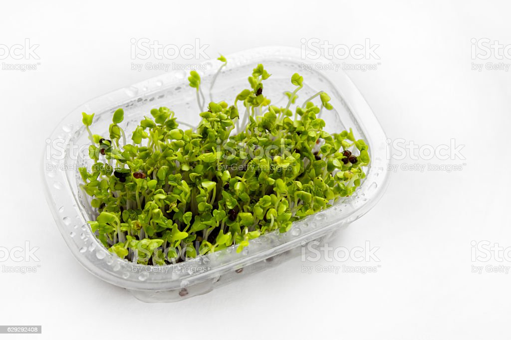 Green broccolli stock photo