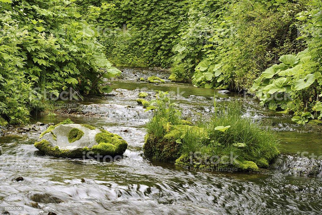 Green brook royalty free stockfoto