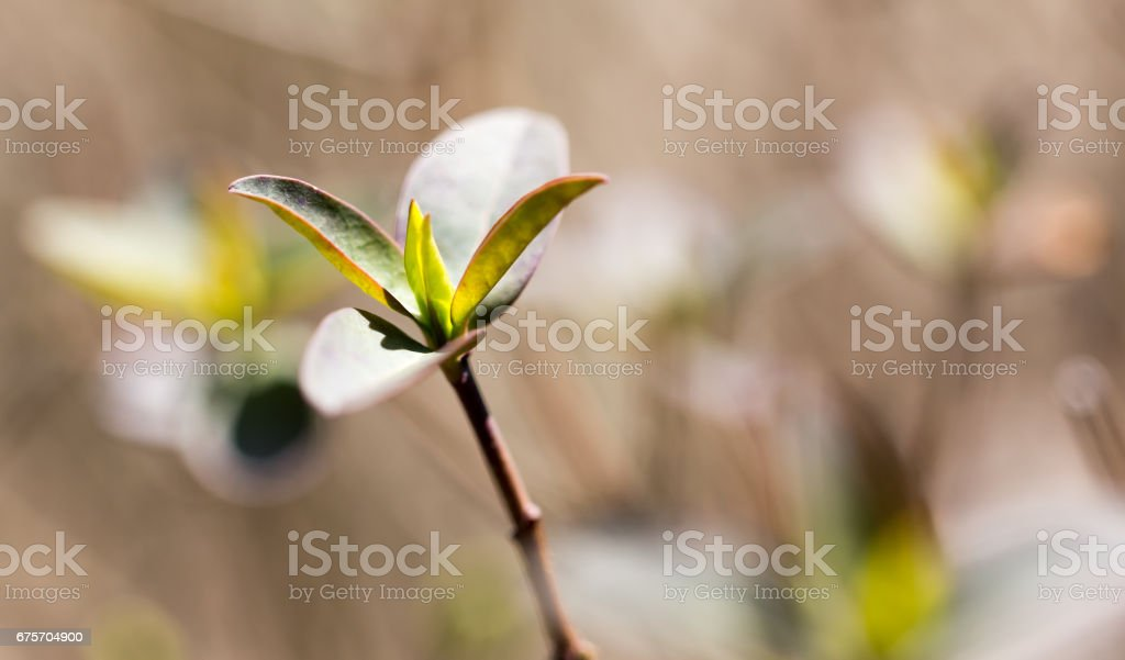 綠色的芽生長在一棵樹在春天 免版稅 stock photo