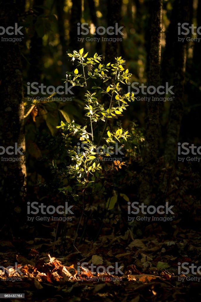 Vert buisson dans sunray en bois - Photo de Beauté libre de droits