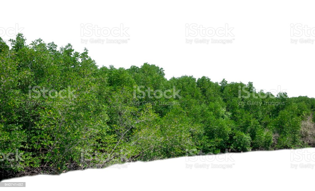 Green bush leaves tree forest isolated on white background stock photo