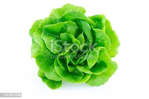 green butter lettuce vegetable or salad isolated on white back ground with clipping path
