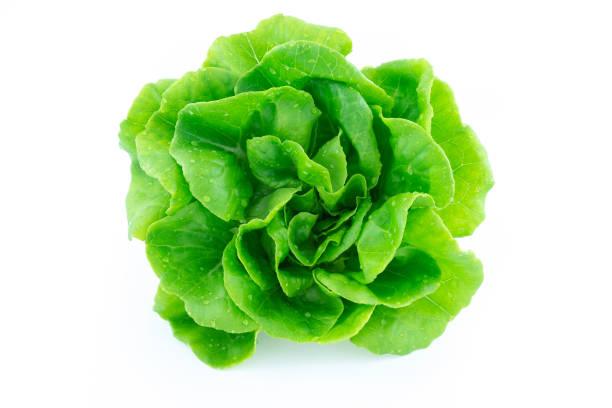 綠色黃油生菜 - 生菜 個照片及圖片檔