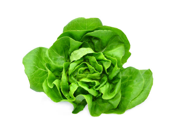 green butter lettuce vegetable or salad isolated on white back ground - lattuga foto e immagini stock