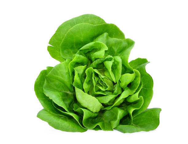 green butter lettuce vegetable or salad isolated on white back ground green butter lettuce vegetable or salad isolated on white back ground butterhead lettuce stock pictures, royalty-free photos & images