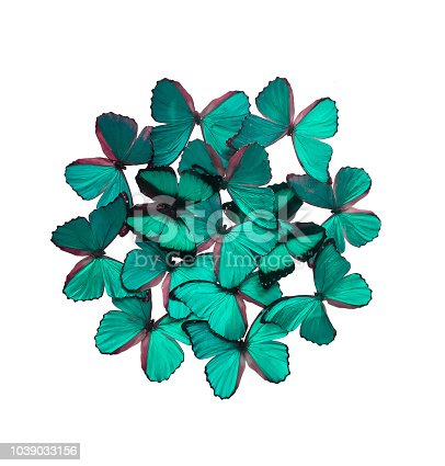999676880 istock photo Green butterflies isolated on white 1039033156