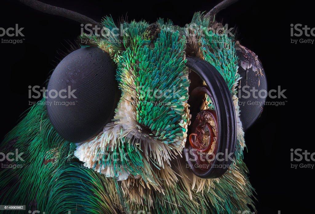 Green butterfly portrait stock photo