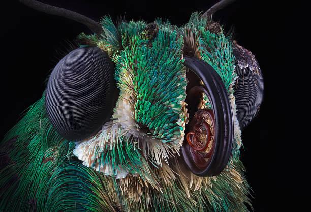 green butterfly portrait - 昆虫 ストックフォトと画像