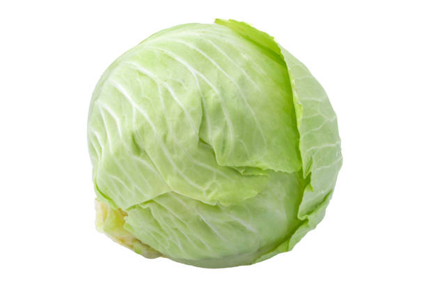 green cabbage isolated on white background. stock photo