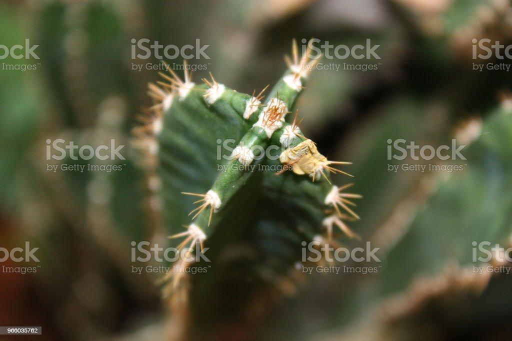 Green cactus closeup in the garden - Royalty-free Art Stock Photo