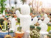 White ceramic cactus shape with green cactus in pots. Various cactus in terracotta and ceramic pots in.