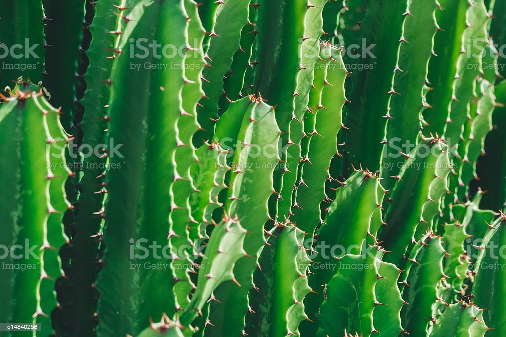 Green Cactus in the wildlife stock photo