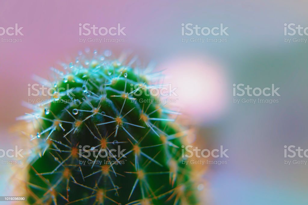 Green cactus macro with spray blur Backgrounds stock photo