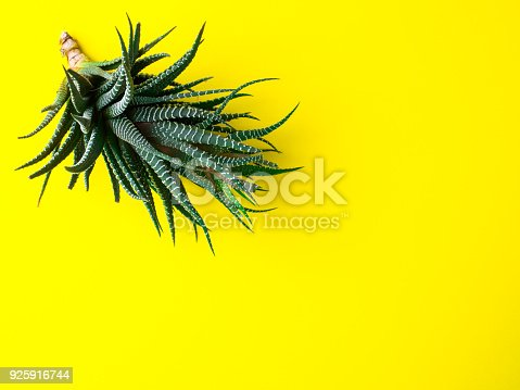 istock Green cactus on a bright yellow background. Creative minimal concept. 925916744