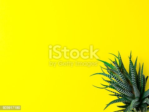 istock Green cactus on a bright yellow background. Creative minimal concept. 925917190