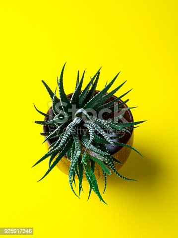 istock Green cactus on a bright yellow background. Creative minimal concept. 925917346