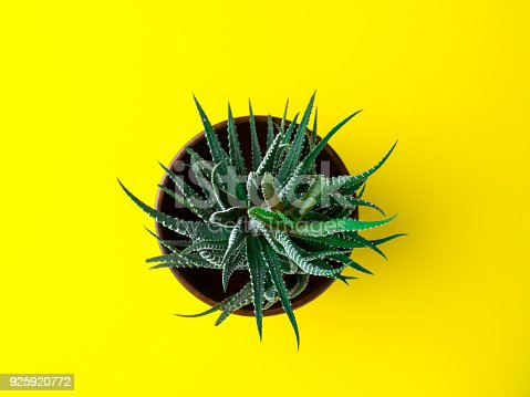 istock Green cactus on a bright yellow background. Creative minimal concept. 925920772