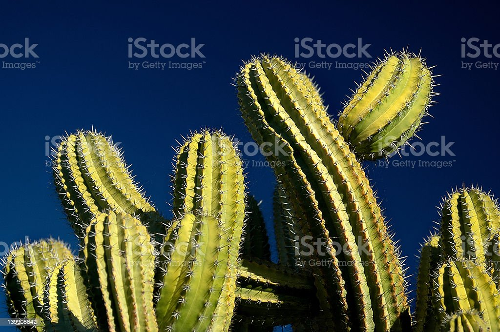 Green Cactus on Blue Sky royalty-free stock photo