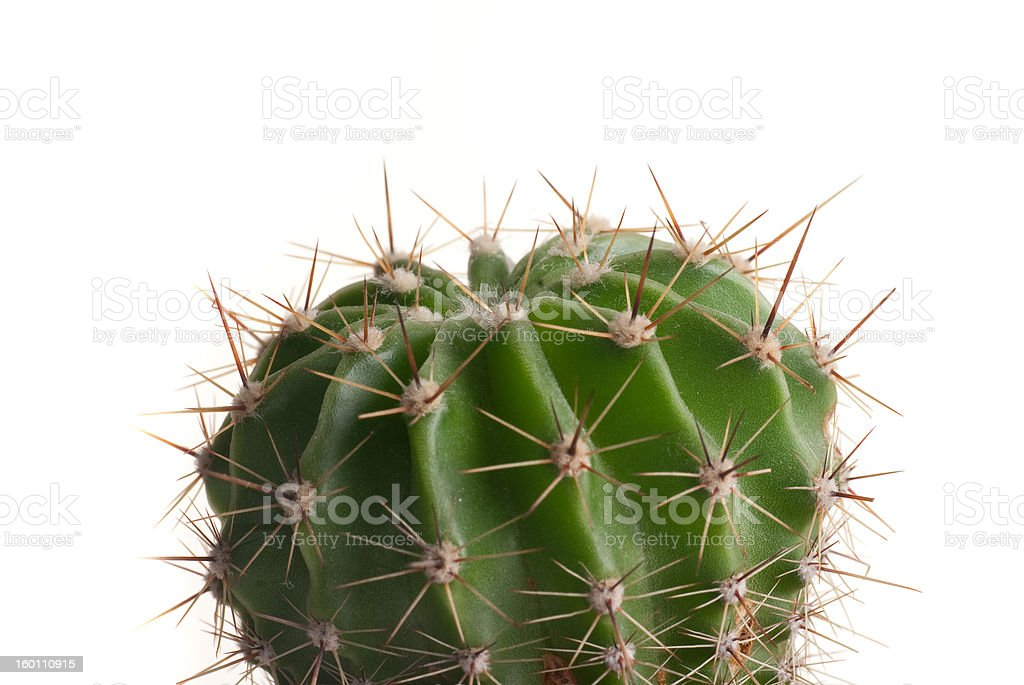Green cactus royalty-free stock photo