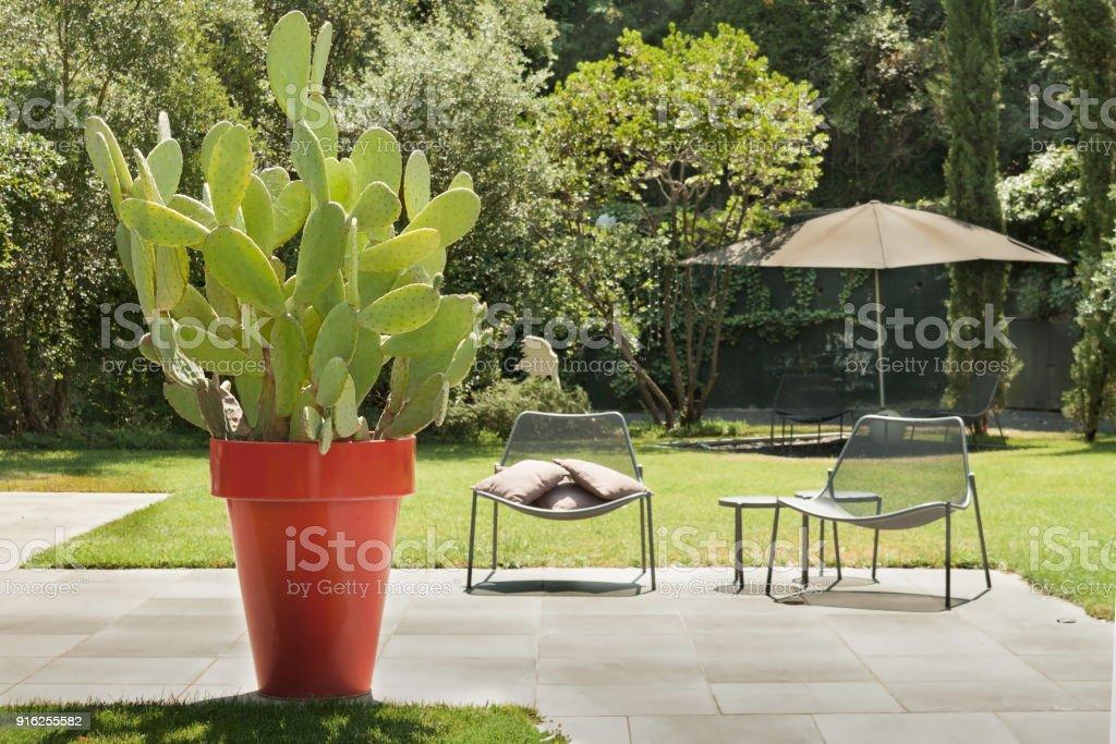 Lugar De Descanso Al Aire Libre Soleado Tranquilo Verde Cactus ...