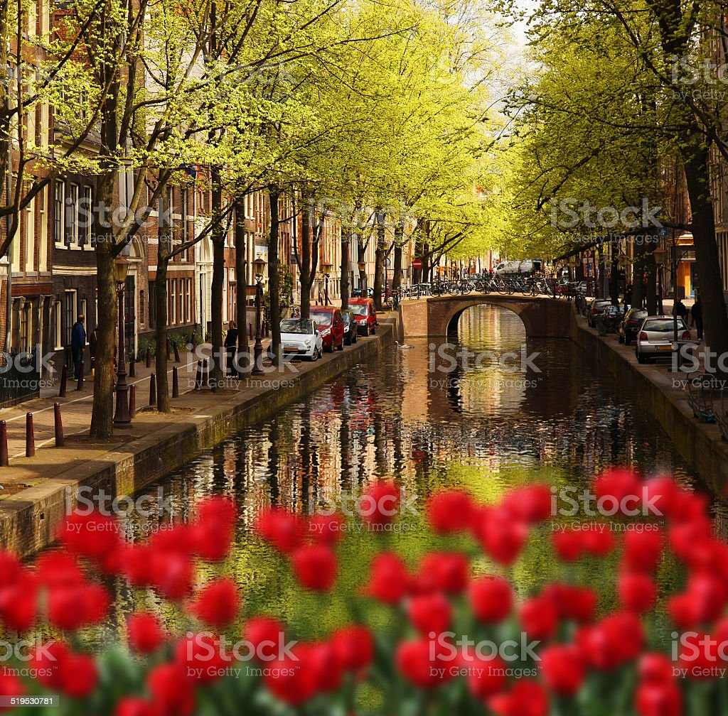 Green canal in Amsterdam against red tulips, Holland stock photo
