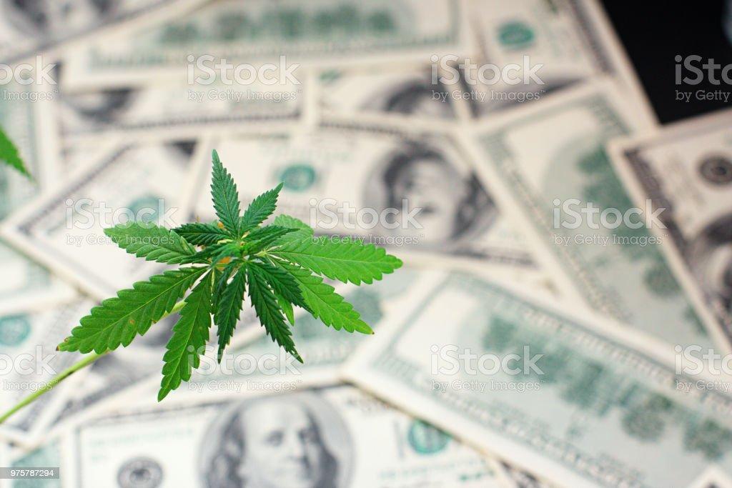 Grüne Cannabisblatt und amerikanisches Geld, Hintergrundbild. Thematische Bilder aus Hanf und Marihuana. Konzept des Unternehmens, Medikamente - Lizenzfrei Besorgtheit Stock-Foto