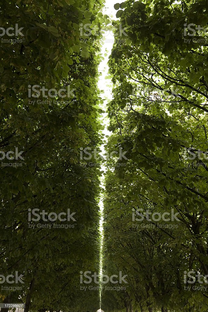 Green Canopy Line royalty-free stock photo