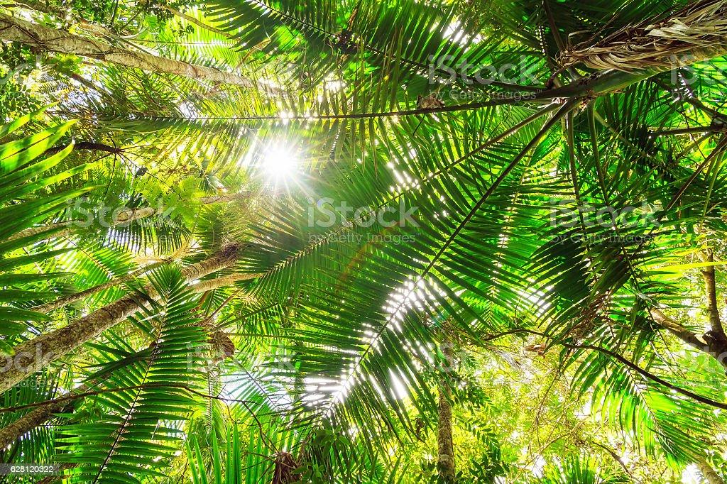 Green canopy stock photo
